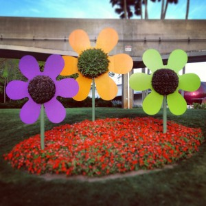 Flowers from Epcot's Flower and Garden Festival